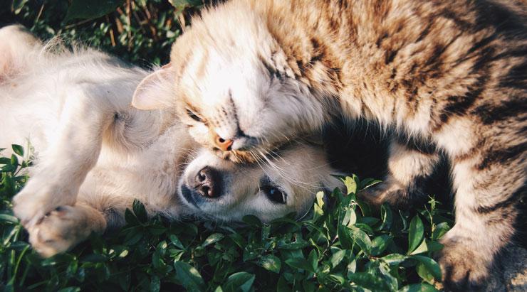 Katt och hund som gosar