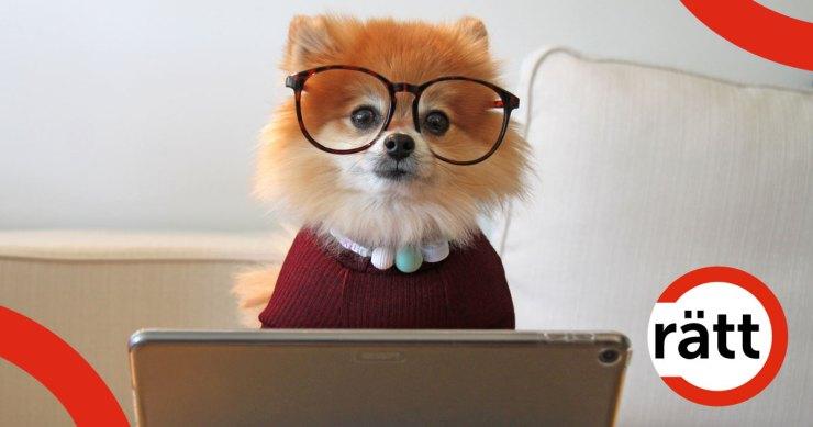 Liten hund med glasögon sitter framför en laptop.